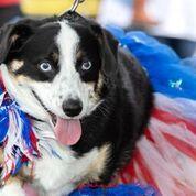2019 Dog Show - Anaheim Hills Community Council